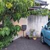 【カフェ ペイジ】古民家カフェに行ってきました。(静岡県富士宮市)