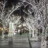 京セラ本社ビル前クリスマスイルミネーション@2020(現像編)