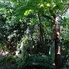 植物がよく育つ場所はスピリチュアルだ!【山口県宇部市常磐公園】