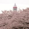 ロケットと桜 - 稲荷山公園コスモタワー