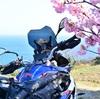 河津桜ツーリング❷