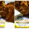 猫好き柔道整復師 @3t_2 さんと猫さんに「ちびねこ亭の思い出ごはん」を紹介してもらいました