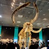 【東京・上野】国立科学博物館『大哺乳類展2』