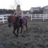 冬の馬たち 冬の風