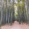 栃木県宇都宮市 CMとかるろうに剣心の撮影舞台になった竹林が魅力 聖地巡礼にいかが 若竹の杜