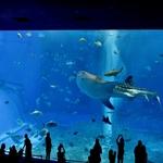 「沖縄美ら海水族館(海洋博公園)」~再訪月並みな施設ですが、見てみる価値は充分あり!!