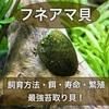 フネアマ貝の特徴や飼育方法!最強コケ取り貝!