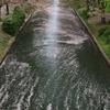 京都の桜も散り始め! 2021