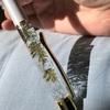 ハーバリウムのボールペンを作ってみました〜〜!!!