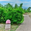「猫空樟樹樟湖(マオコン クスノキ クスノコ)步道」~ここでも歩きます、台湾でも軽いトレッキングを!!
