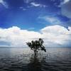 【営業部研修旅行】八重山諸島の島巡りツアーの魅力をご紹介!