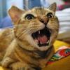 6月前半の #ねこ #cat #猫 どらやきちゃんA