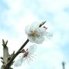 身の回りの花木
