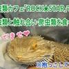 爬虫類カフェROCK★STARで、爬虫類と触れ合い、爬虫類を食べた