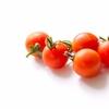 【水耕栽培】塩ビ管でミニトマトを栽培する方法