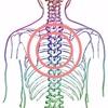 背中への意識 乳がん自然療法