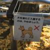 雑司ヶ谷の柴犬系看板とその他犬物件