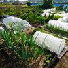 家庭菜園の生育状況について