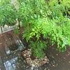 雨の一日。