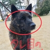 甲斐犬サンのチャレンジ❗️の巻〜決戦の日は日曜日〜♬(´-ω-`)マァホドホドニ。
