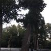 杉でかぁ〜〜🙀