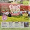 国営アルプスあづみの公園でチューリップ・菜の花祭りが開催されるよ(2021年4月17日〜5月23日まで)