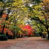 京都 紅葉100シリーズ 下鴨神社 糺すの森