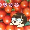 【コストコ】めっちゃ甘い!はなひめのトマトとミニドーナツ【尼崎】