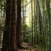 EOS 90D レンズを変えて森でテスト