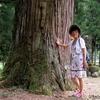 日本 背景は春日神社の大杉