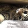 【猫ブログ】サラちゃんが心配2