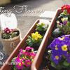 【検証結果】無料でガーデニング!セリアの水切りネット&ペットボトルで花を、雪と雨から守れるか?②|メリットと注意点