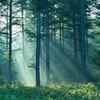 灼熱の太陽から逃れて、さわやかな森へ!ハイドン:オラトリオ『四季』より第2部『夏』〝日照りと暗い森〟