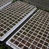 花の種まき(21アスター、21ジニア、21センニチコウ、21ケイトウ)