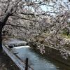 桜の季節にひきとってきたもの