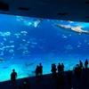 女一人ぼっち旅 in 沖縄《車なしでも楽しめるバスツアーで行く美ら海水族館と絶景カフェ》