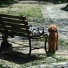 【犬】No.3:淡嶋神社