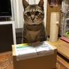 お風呂好き猫のプーチンさんの為にペット用抗ダニ・保湿高級シャンプープロポリス・ワンを買ったのだ(開封編)