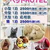 ペットホテル/予約受付中/犬猫ホテル/松島町