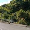 竹林を伐採してみると、太陽光発電に適した土地になりました!