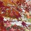 紅葉に綺麗な写真を撮りたい!ミラーレスカメラ徹底比較!