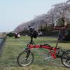ブロンプトンに乗って秦野の桜を満喫してきた。
