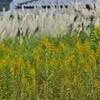 長引く秋の花粉症の特効薬は寝ること?