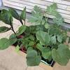2021春夏シーズンで定植する苗はこれだ