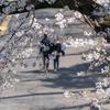 みんなそんなに桜が好きなのか?大阪城公園の桜