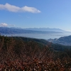 諏訪湖付近の上空を飛ぶ鷹