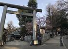 上野公園、消えたホームレス事件、寒桜