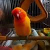 毛引き対策も鳥それぞれ