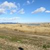 渡良瀬遊水池 - 4県をまたぐ広大な湿原   オススメ観察スポット