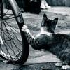 自転車もパンクしていた話・・・これって恨まれている!?